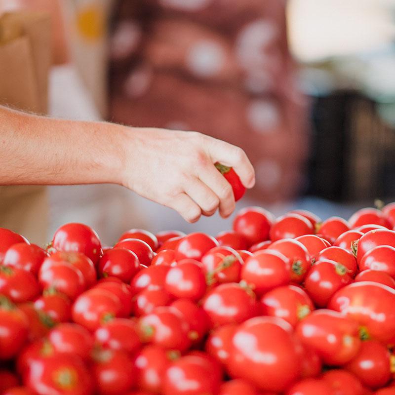 SoLaWi Chiemgau | schmackhafte Tomaten