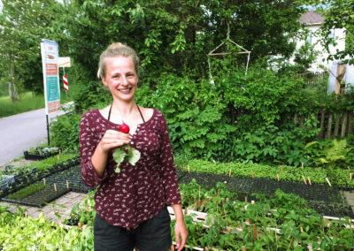 Radieschen vom Feinsten | SoLaWi Chiemgau