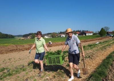 Nachschub zum Pflanzen | SoLaWi Chiemgau