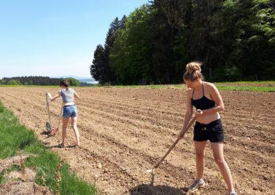 Fleißige Helferinnen | SoLaWi Chiemgau