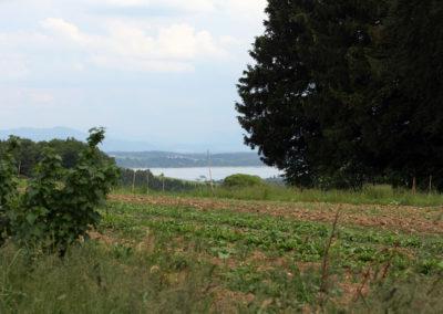 Waginger See | SoLaWi Chiemgau