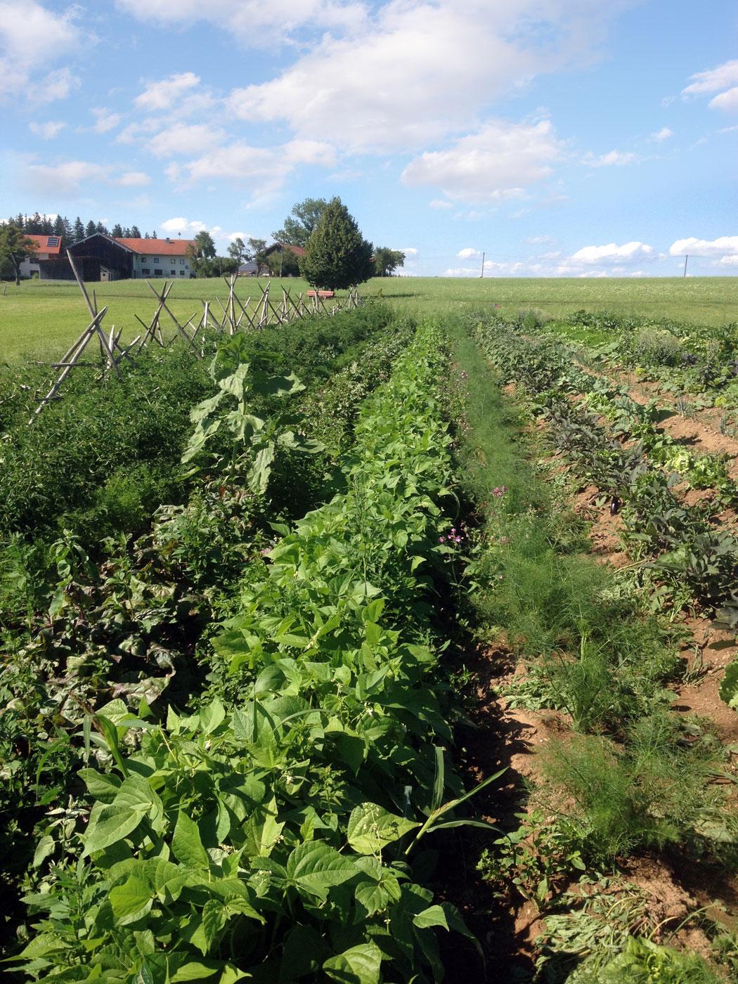 SoLaWi Chiemgau | Die Anbaufläche bei Tettenberg im Rupertiwinkel bei Waging